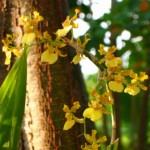 Orchids4a