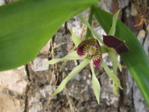 Orchids5a